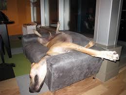 Dog Bed Furniture Sofa by Big Dogs Beds Kika Pet Furniture Beds