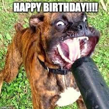 Birthday Dog Meme - happy birthday imgflip