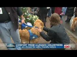 Comfort Golden Retriever Breeders Golden Retriever Comfort Dogs Visit Grieving Families After