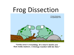 frog dissection why do you think we are dissecting frogs ppt