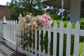 picket fences white picket fence these days of mine