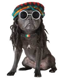 puppy halloween costume for baby stoned in love with you baby dog lovers pinterest dog and