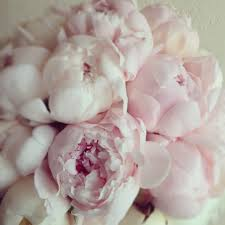 Peonies Delivery Botany Floral Studio 647 341 6646 Toronto Florist Flower