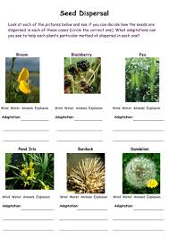 seed dispersal worksheets for key stage 2 science by rhiannonallen