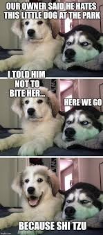 Dog Owner Meme - bad pun dogs imgflip