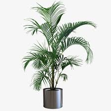 indoor plant potted plants potted plants green indoor potted
