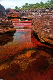Most Beautiful Colors by Multicoloured Plants Turn Colombian Waterfall Into A U0027liquid