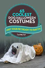 65 best dog halloween costumes u2013 top dog tips
