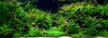 japanese aquascape dense forest land aqauscaping theme with dry woods arrangement