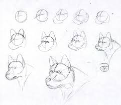 how to draw a dog 1