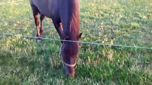 Nice Hourse Nice Horse Youtube