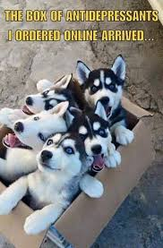 Antidepressant Meme - your box of antidepressants just arrived cute puppy meme funny