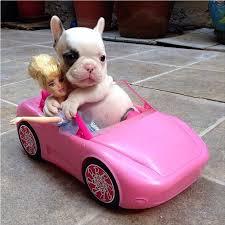 puppy toy car aww