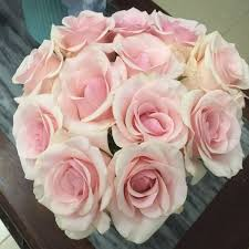 export china 2017 high quality fresh cut flowers roses for