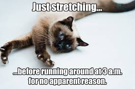 Sneaky Cat Meme - cat memes 25 ways to laugh pet memes cat and sad cat