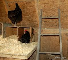 How To Build A Simple Storage Shed by How To Build A Chicken Coop From A Garden Shed Countryside Network