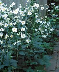 Fall Garden Plants Texas - best 25 fall blooming flowers ideas on pinterest