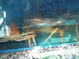 deep sea fish restaurant uoshige in heda izu peninsula