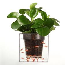 Self Watering Indoor Planters by Compare Prices On Tray Planter Online Shopping Buy Low Price Tray