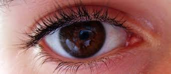 Does Macular Degeneration Always Lead To Blindness Dietary Prevention Of Age Related Macular Degeneration
