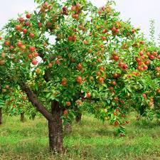 tips for planting fruit trees green living ideas