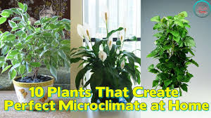 10 plants that create the perfect microclimate at home youtube