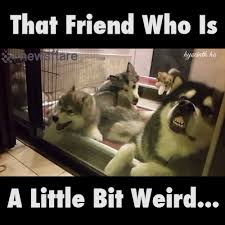 Tag A Friend Meme - tag that friend who is a bit strange watch or download