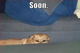 Soon Meme - funny soon meme 38 pics
