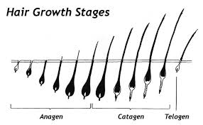 stages of dreadlocks pictures what are the stages of natural hair growth for long healthy