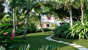 Landscaping Ideas For Florida by Tropical Garden Modern Path No Mulch Around Trees Garden