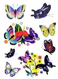 bug gifts butterfly supplies and birthday gifts plus