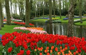 and belgium cruises rhine river tulip time cruises