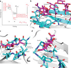 intrinsic effects of n glycosylation on protein folding the