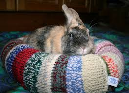 Rabbit Beds Ugli Donut Rabbit Bed For A Small Sized Bunny By Thehareapparent