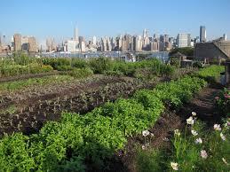 Urban Gardening New York 100 Urban Gardening Nyc Required Reading Sidewalk Gardens
