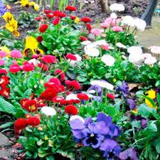 garden u0026 flowering plants dobies dobies