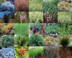 australian native plant nursery plant inspirations plant nursery sales online delivered