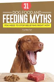 32 dog food and feeding myths debunked by science infographic