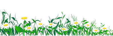 daisies and grass png clipart picture gallery yopriceville