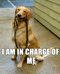 Golden Retriever Meme - dog holding own leash is master of his domain meme on imgur