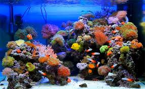 Aquascape Reef Reef Aquascaping Inspiration Reef Designs Pinterest Reef
