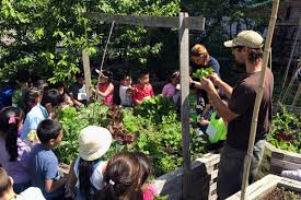 Urban Roots Garden Center What Would Make Urban Agriculture In New York City More Equitable