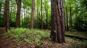 download wallpaper 1920x1080 tree trunk fern earth underbrush
