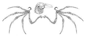 sourcehorsemen com u2022 view topic bone wings