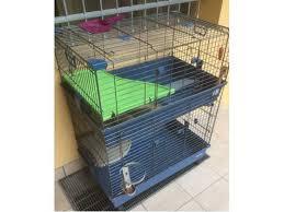 gabbie per conigli nani usate gabbia conigli nani clasf