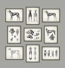 Dog Anatomy Poster Canine Anatomical Posters Gift Ideas Pinterest Poster Dogs