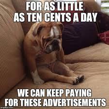 Sad Animal Memes - sad dog memes imgflip