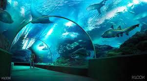45 off sea life bangkok ocean world klook