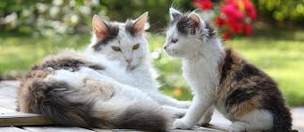 Taking Care Of A Blind Cat How To Tell If A Cat Is Pregnant 5 Tell Tale Signs Care Com