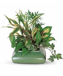 plants for funerals flowerwyz cheap funeral plants plants for funerals popular